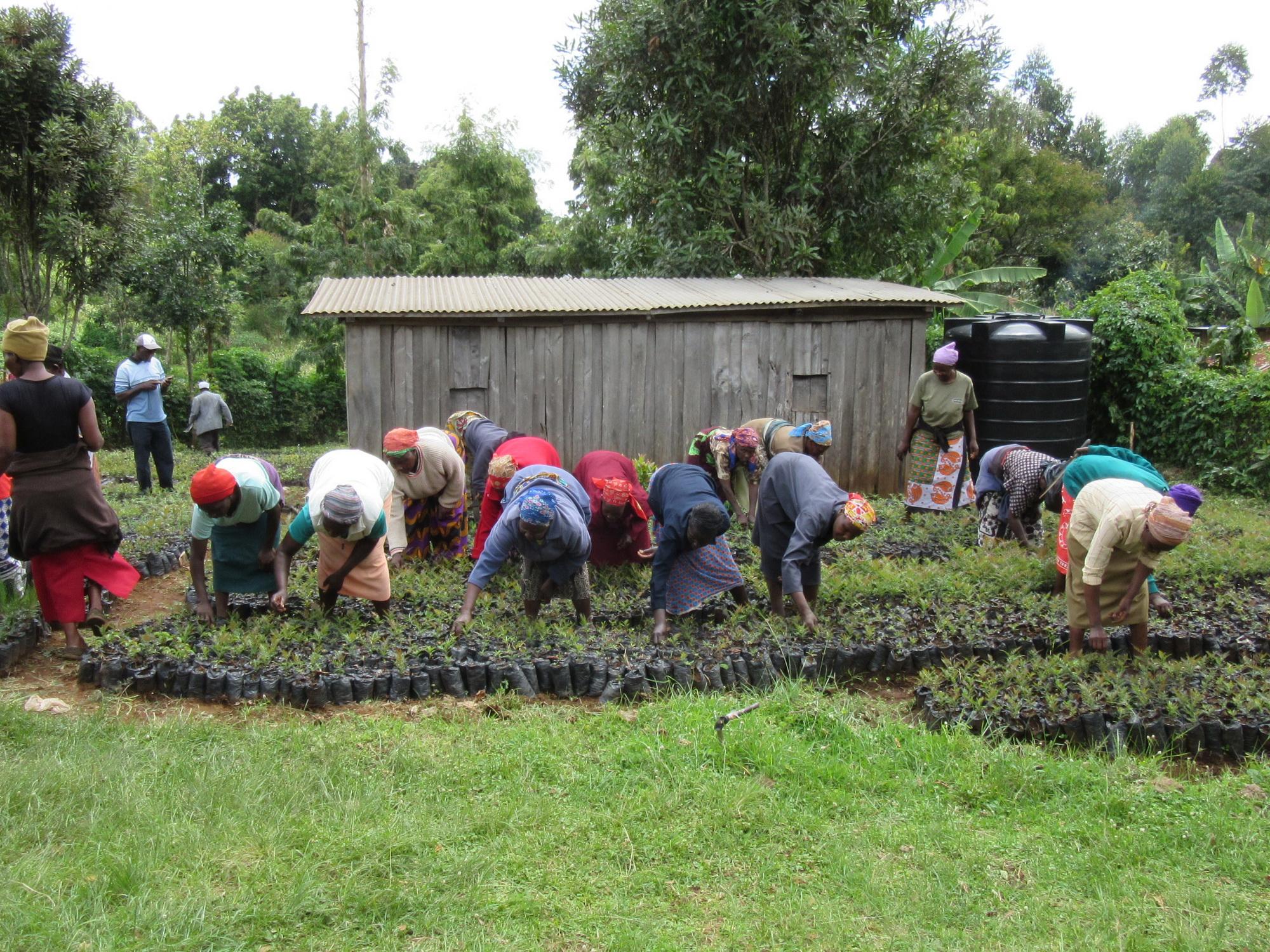 Women work in their tree nursery preparing seedlings